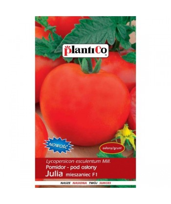 Pomidor pod osłony JULIA F1