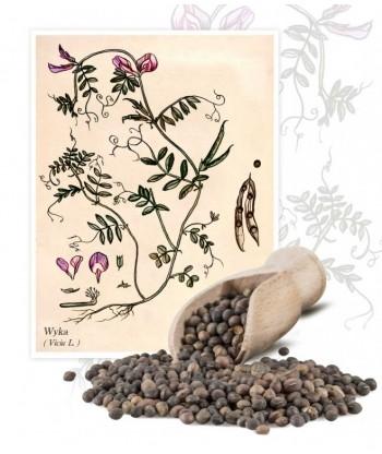 Wyka HANKA nasiona 1kg PLANTA