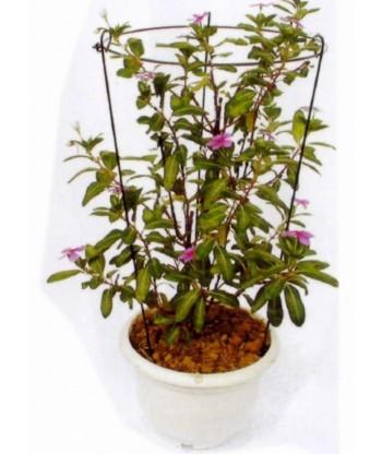 Podpora pierścieniowa kolista fi18 h28 Exo-flora