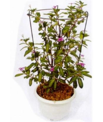 Podpora pierścieniowa kolista fi21 h50 Exo-flora