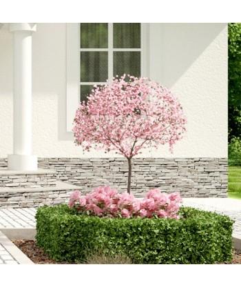 Ogród Frontowy Garden Box - Profesjonalna aranżacja ogrodu