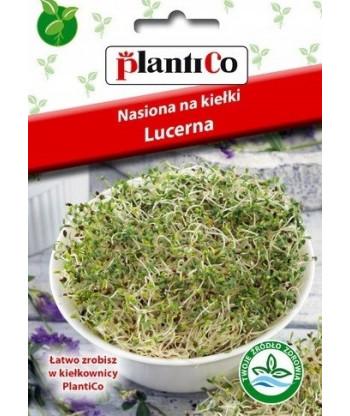Nasiona na kiełki - kapusta biała 20g PlantiCo