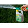 SprayGreen do thui 950ml Zielony Dom