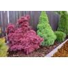 Zrębki drzewne BIOVITA 50 L kolor żółty