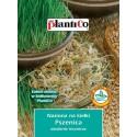 Nasiona na kiełki - Pszenica 50g PlantiCo