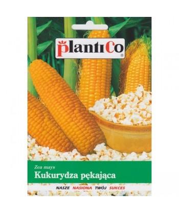 Kukurydza pękająca PŁOMYK