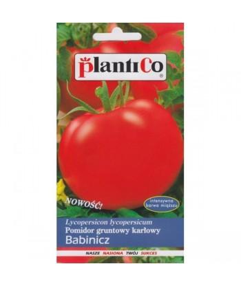 Pomidor gruntowy karłowy BABINICZ